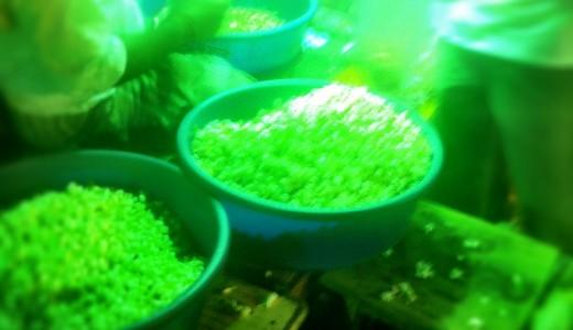 Chennai Flower Market